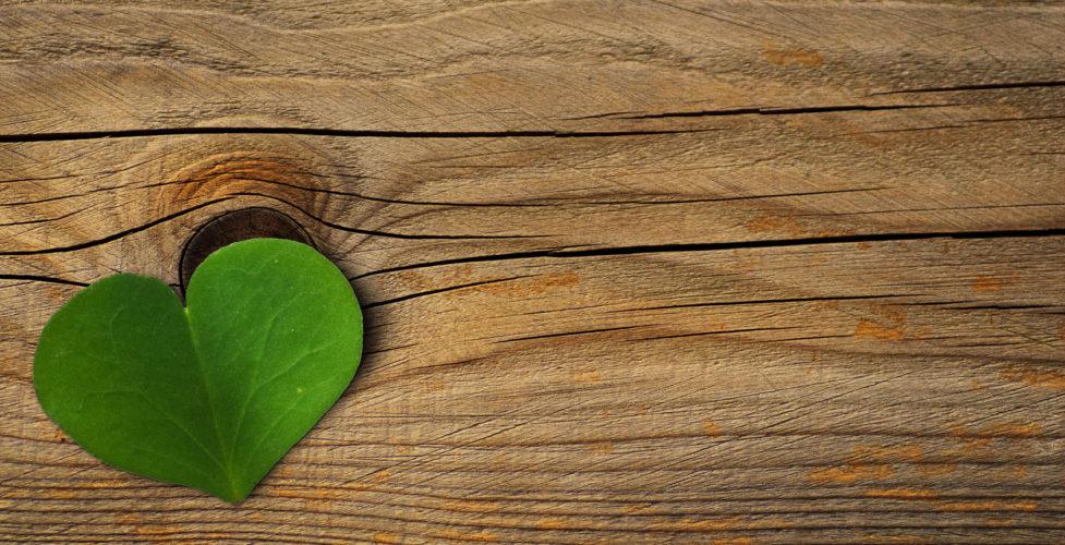 Podłogi drewniane Baltic Wood - ekologiczne i bezpieczne dla środowiska
