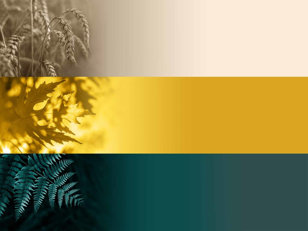 Kolory roku 2021: Sail Champagne, Fortuna Gold, Tidewater Green